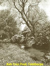 a_a_ash_tree_pool111